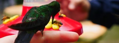 Costa Rica – Eine Geschichte von Kolibris und Platanitos