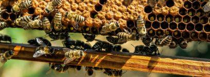 Bienenhaltung und Imkern
