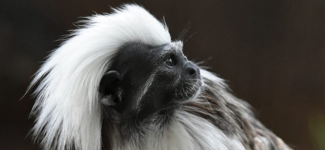 Affenstark – Besuch bei Verwandten im Kölner Zoo